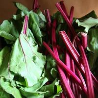 ルテイン,野菜,含有量,10位,ビートグリーン