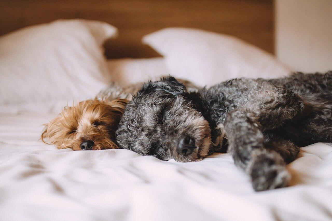 すやすやと眠る子犬